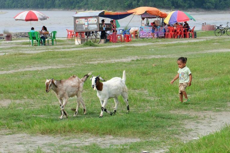 in Narayani river
