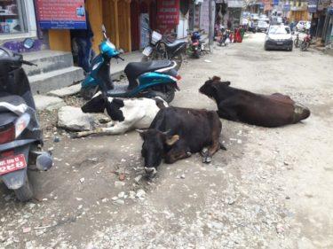 ネパール旅行を楽しむために〜ネパール旅の7つの注意点!!