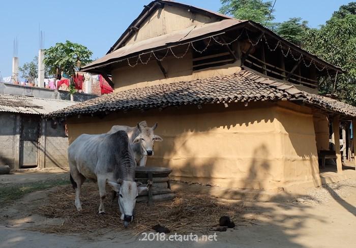 Souraha village