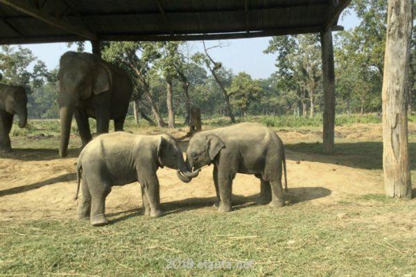 Elefant childrens