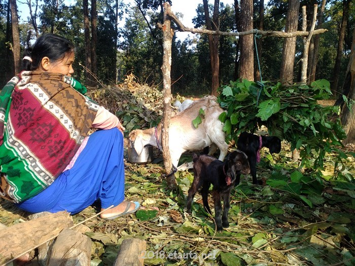 mother and goats