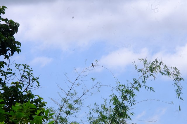 bird watching in shantaghar