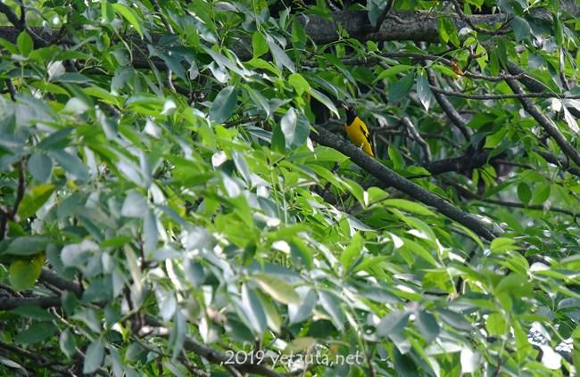 a bird in chitwan of nepal