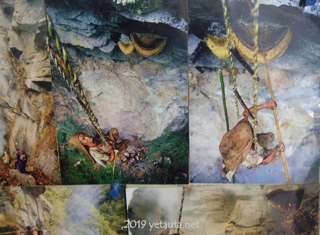 honey hunter in nepal