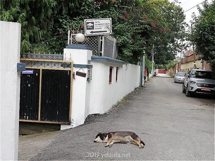in street og nepal